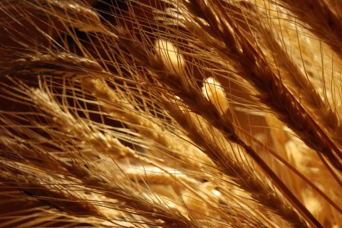 wheat from the chaff